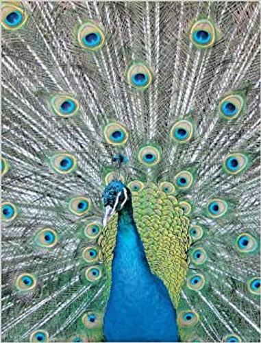 Blue Peacock Sketchbook