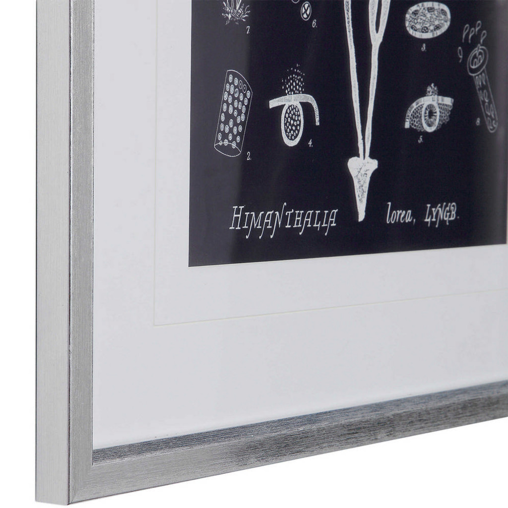 Coral on Navy Framed Prints S/8