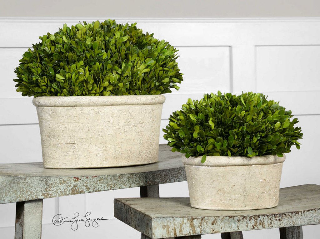 Preserved Boxwood Oval Domes S/2
