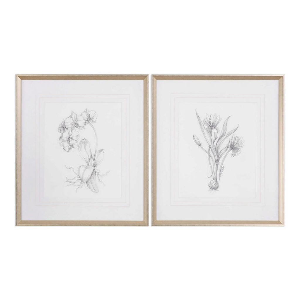 Botanical Sketches Framed Prints S/2 by Uttermost