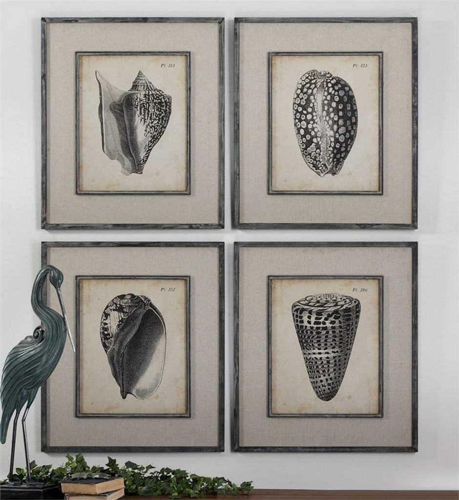 Vintage Diderot Shells Set/4 - Framed Artwork a Prints Framed by Uttermost