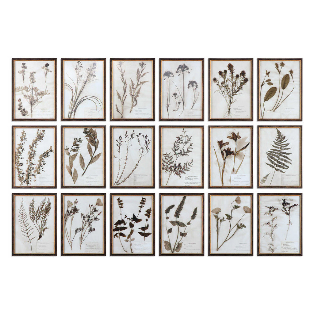 Botany Framed Prints S/18 by Uttermost