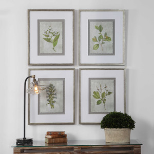 Stem Study Framed Prints S/4 by Uttermost