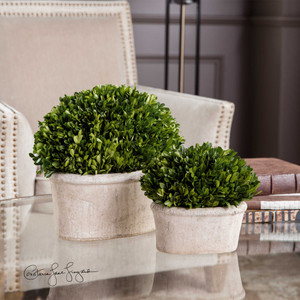 Preserved Boxwood Oval Domes S/2 by Uttermost