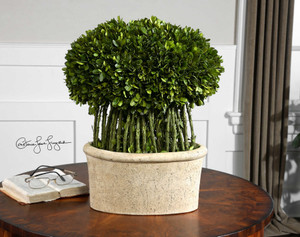 Preserved Boxwood Willow Topiary by Uttermost