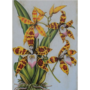 C379 Spider Orchid Plant Canvas by Bramble Co
