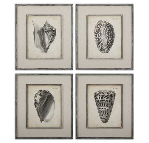 Vintage Diderot Shells Set/4 - Framed Artwork