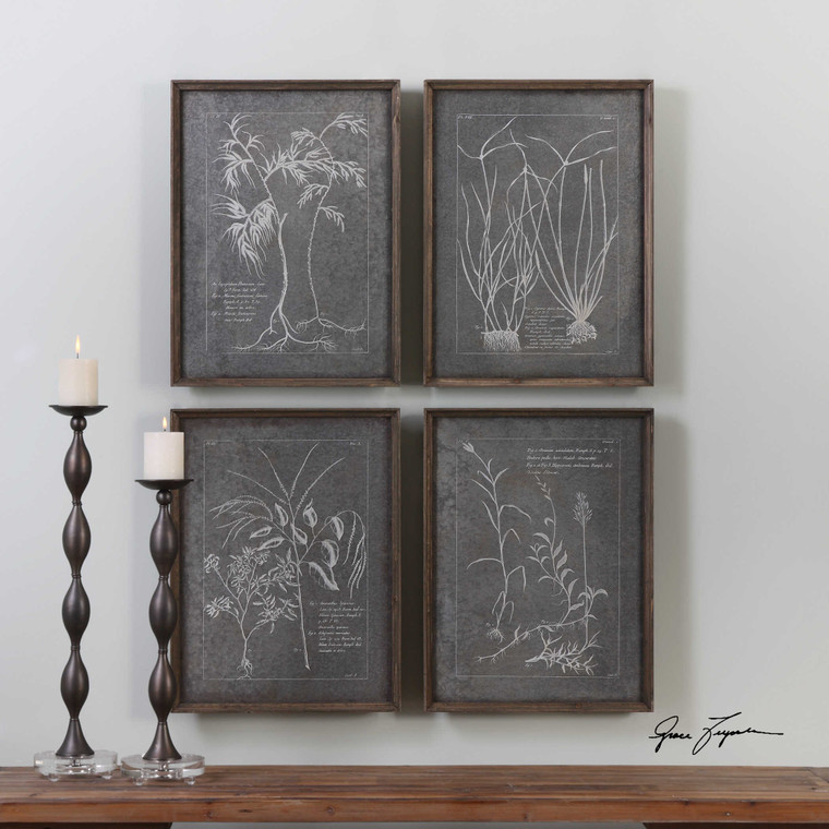 Root Study Framed Prints S/4 by Uttermost