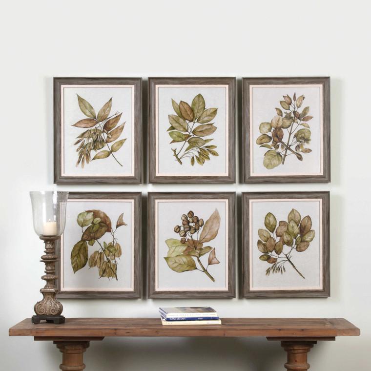 Seedlings Framed Prints S/6 by Uttermost