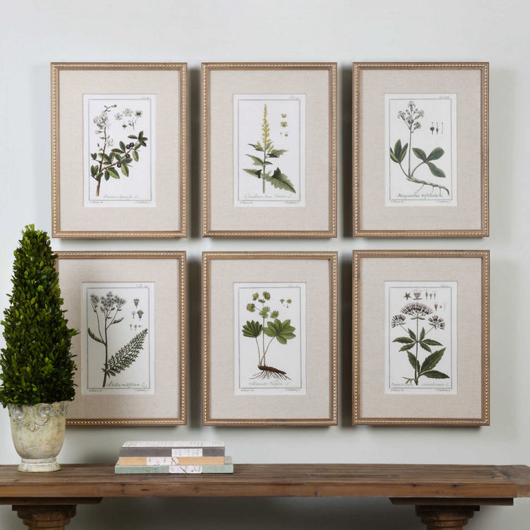 Green Floral Botanical Study Framed Prints S/6 by Uttermost
