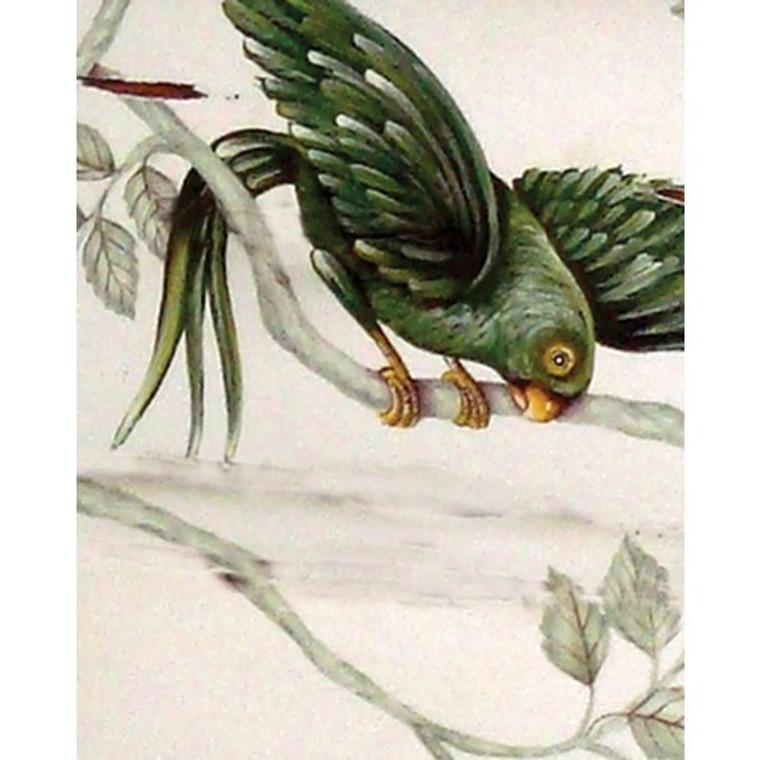 A84 Green Parrot by Bramble Co