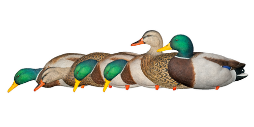 Avian-X Top Flight Full Body Mallard Duck Decoy Set 6 Pack Model #A8061