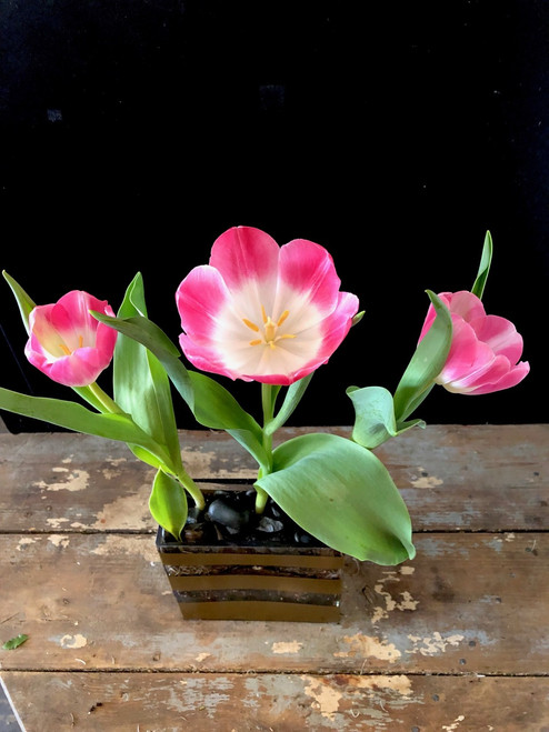 Brighten anyone's day with Spring Time tulips in assorted colors -  Limited time availablility