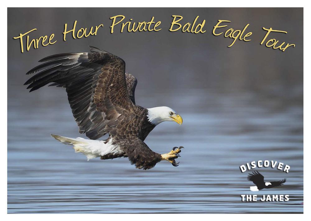 3-Hour Private Bald Eagle Tour