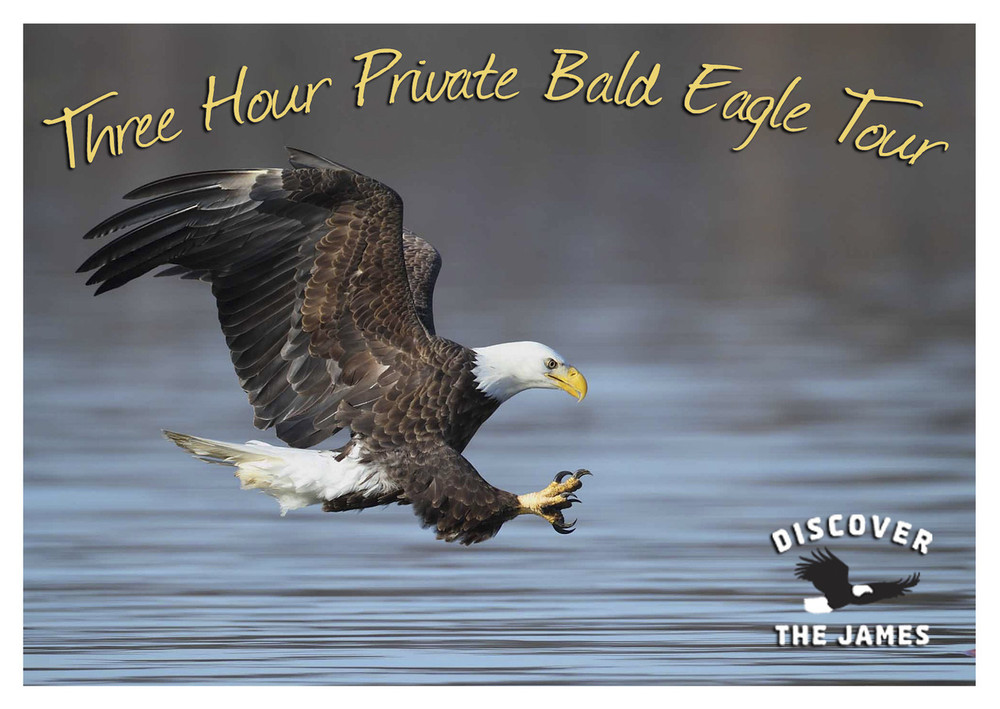 3-Hour Private Bald Eagle Tour