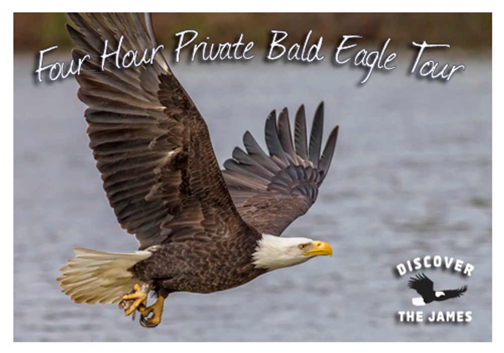4-Hour Private Bald Eagle Tour
