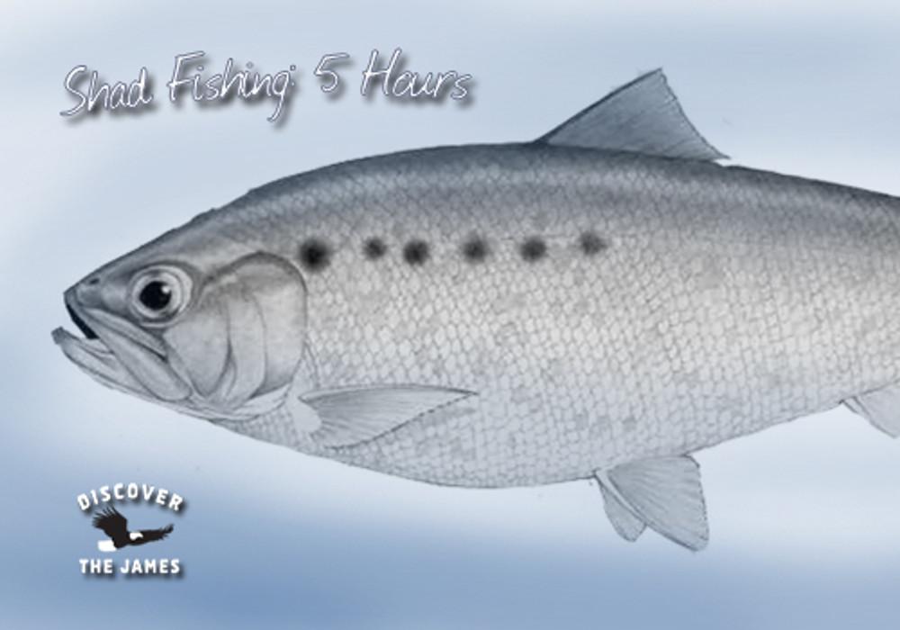 Shad Fishing: Half Day (5 hours)