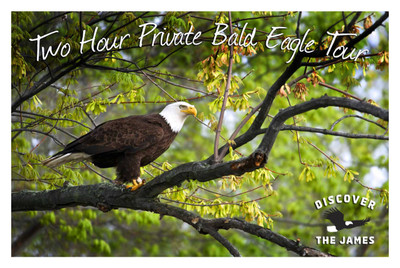 2-Hour Private Bald Eagle Tour