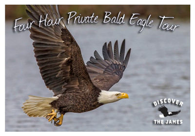 4-Hour Private Bald Eagle Tour