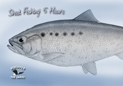 Shad Fishing: Half Day (5 hours)