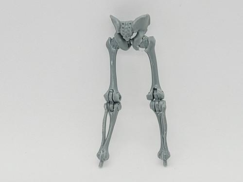 Gray Skeleton Legs