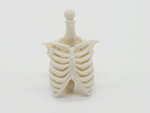 White Skeleton Torso