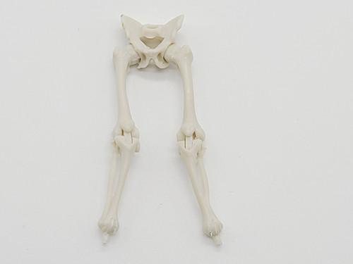 White Skeleton Legs