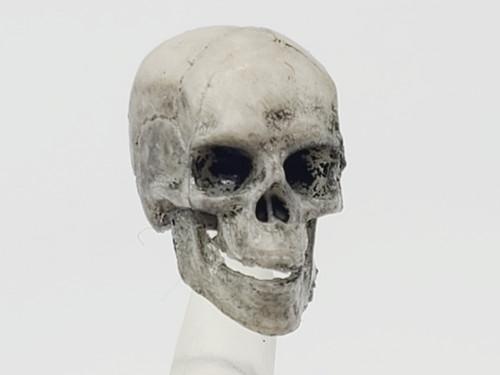 Weathered Skeleton Skull