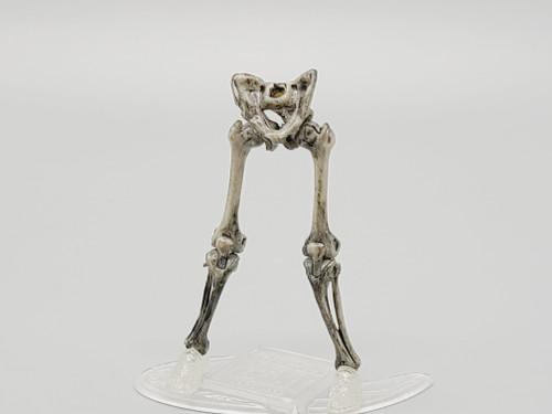 Warrior Skeleton Weathered Legs