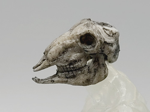 Skeleton Kit - Ram Skull (de-horned)