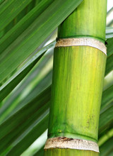 Ingredient Spotlight on Beautifying Bamboo Water