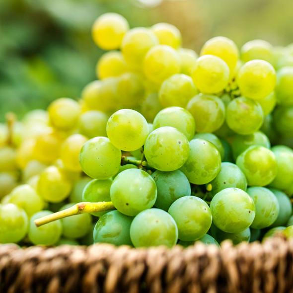 White Grape Flavor Concentrate