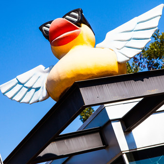 With the largest selection of rubber ducks and other unique gifts, The Pretty Duckling uses this Texas-sized winged duck as its mascot and point of reference.
