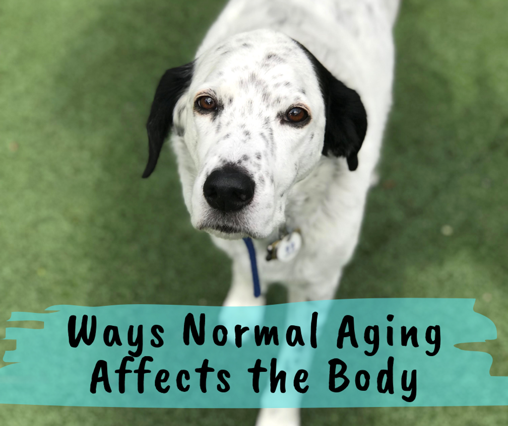 Ways Normal Aging Affects the Body