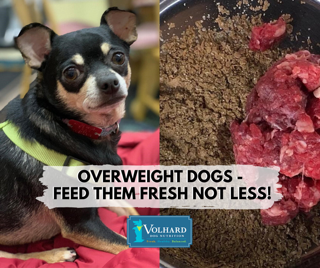 ​Overweight Dogs - Feed Them Fresh Not Less!