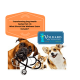 Transforming Your Dog's Health Series Part III  -  What Should the Wellness Exam Include?