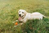 Easy DIY Frozen Summer Treats For Your Dog