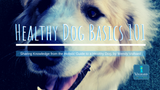 Does My Dog Need Fats? | Healthy Dog Basics 101