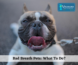 Bad Breath Pets: What To Do?