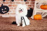 10 Scrumptious DIY Halloween Treats For Your Dog