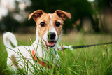 Science Proves Dogs With Cancer Survive Longest On A Diet