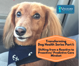 Transforming Dog Health Series Part I: Shifting from a Reactive to Proactive/ Predictive Care Mindset