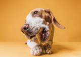Why Feeding Cooked Bones To Your Dog Is A Bad Idea