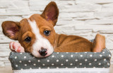 Helping Your New Dog Overcome Kennel Cough with a Proper, Nutritious Diet