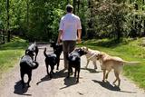 Breeder Spotlight: Jane Kelso, 25 Years Feeding Volhard's Natural Diet