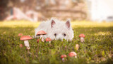 Can Dogs Eat Mushrooms? A 101 Guide to Canine Mushroom Tolerance