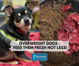 Overweight Dogs - Feed Them Fresh Not Less!