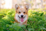 7 Fun Summer Activities for You and Your Dog