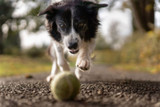 Five Volhard Scent Games for You & Your Puppy