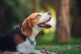 Does Your Dog Stay Away from the Water Bowl? 4 Tips on How to Hydrate Your Dog